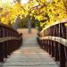 Physical Therapy Bridge Program